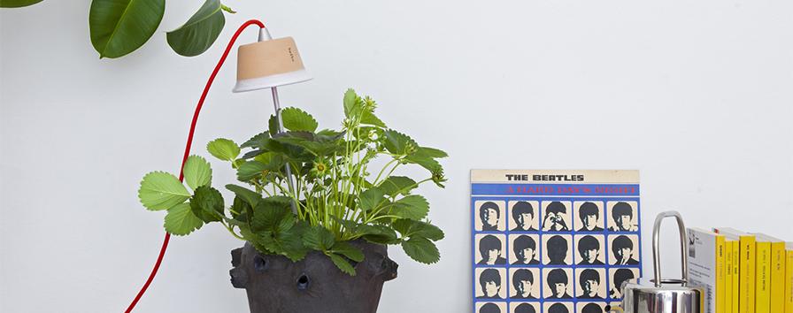 La Lampada Per Piante Chlorophyll Può Essere Installata Direttamente In  Vaso Con Lu0027apposito Supporto